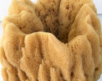 """XL VASE Sea Sponge 1pc 7""""-9"""", Decorative, Magnificent Display Sponge, Natural & Sustainably Harvested, Free Usa Ship, Two Wild Hares"""
