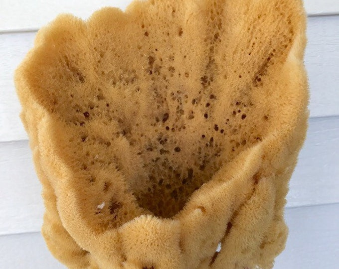 """XL Decorative Vase Sea Sponge, 7-9"""" Magnificent Display Sponge, Natural & Sustainably Harvested, Two Wild Hares"""