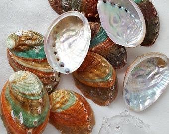 "Beach Decor Seashells, Nautical Decor Abalone Shells, Specimen Shell, Kamstcha Abalone, Abalone Seashell, Fancy Shells, 3-4"""