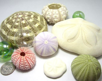 Beach Decor Sea Urchin Seashell Assortment - Nautical Decor Sea Urchin Shells,  6PC Collection