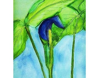 Jack In The Pulpit  Painting  , Matted Watercolor Painting , Original  Painting , 12 X 16 inches