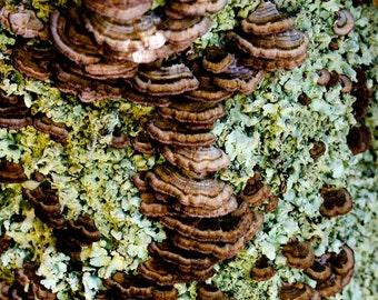 Photograph Abstract Macro Chocolate Brown Mushrooms and Mint Green Moss Fungi Vertical Nature Botanical Art Print Home Decor