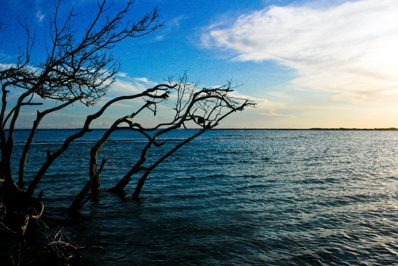 Photograph of Blue Caribbean Sea and Dark Tree Branches in image 0