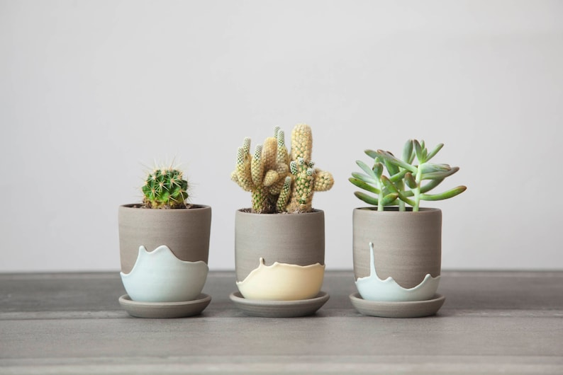 Cactus pot  ceramic planter  small plant pot  plant pot image 0