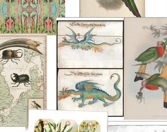 Botanical Birds Insects Ephemera Mix Kit Journal Pages Images Nine PDF Printable Sheets 8 1/2 x 11 Pinks Reds Green Teal Color