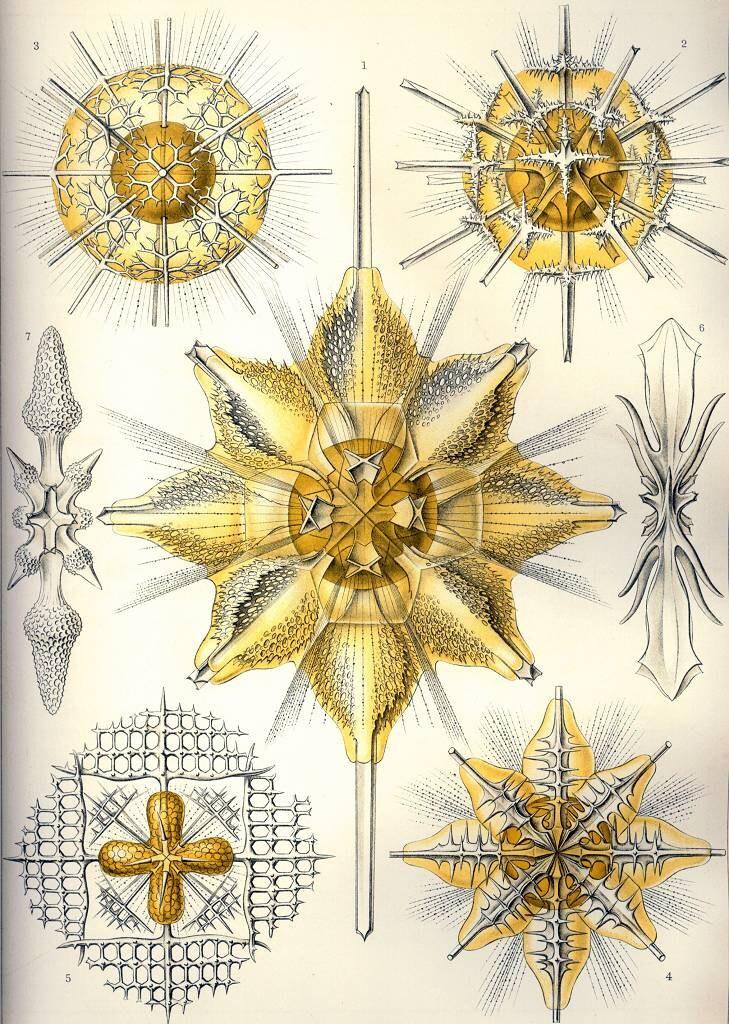 Digitaler Download Haeckel Acanthrometra Ektoplasma | Etsy