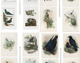 Exotic Birds Ephemera Mix Junk Journal Tags Images Five PDF Printable Sheets 8 1/2 x 11 Pinks Reds Blues Color