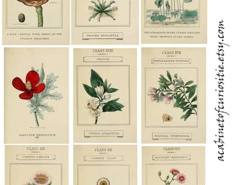 Digital Instant Download ATC Vintage Seedpacks Collage Sheet  ACEO Backgrounds , Printables, Collage Sheet 8 1/2 x 11 Journal Adds