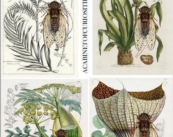Vintage Botanical with Brood X Cicada Collage Sheet  8 1/2 x 11 Journal Adds PDF Digital Instant Download