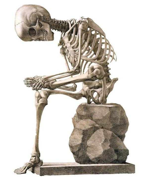 Archivo digital PNG sentado cuerpo esqueleto hueso estructura ...