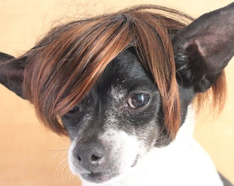 Cute pet   wig  for dog or cat