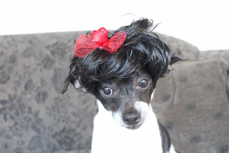 Black color pet   wig with red color bow