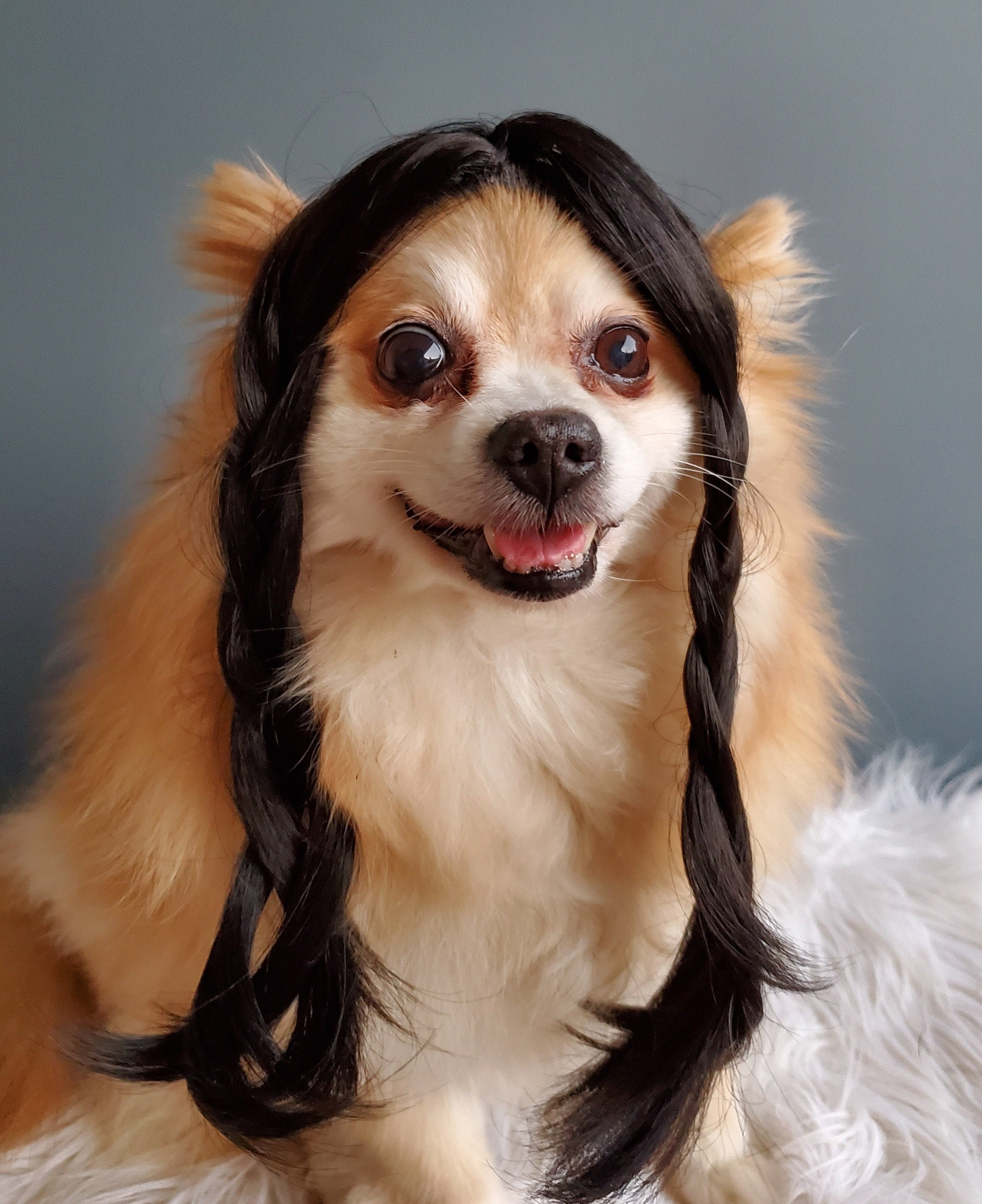 Download Xs Halloween Costumes For Dogs Images