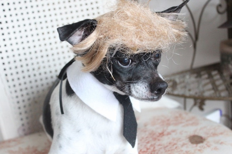 Donald Trump Pet wig for dog or cat  302537251