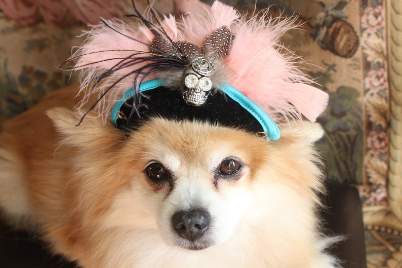 Pirate  black color hat with blue  color trim  hat for dogs and cats