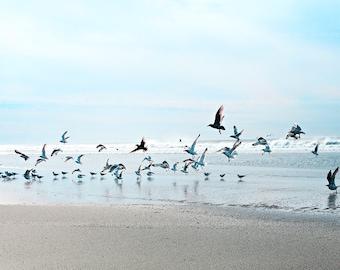 """Ocean photography,Beach home decor """"Flock of birds"""" ocean,seashore,summer decor,seagulls,seascape,calming"""