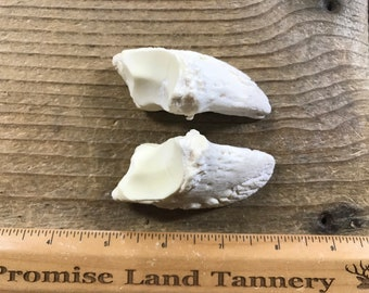 Corked Vial Filled with Marten Large Toe Bones 191103-PPP Lot No