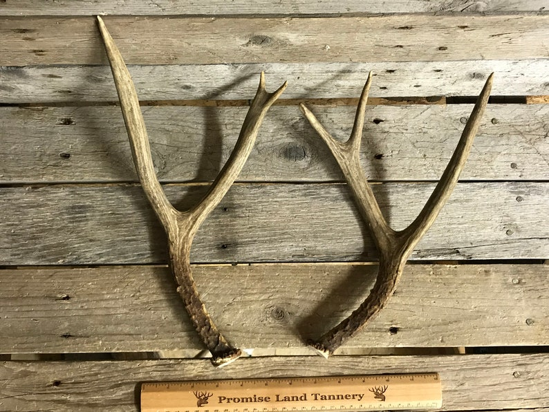 190321-C Medium Matched Pair of Mule Deer Antlers Lot No