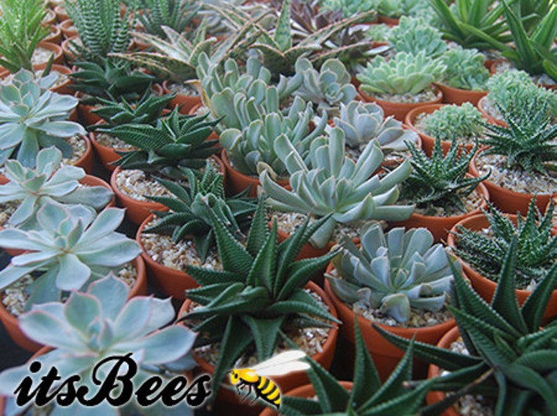 Assorted Plants in Small 2 Terracotta Clay Pot  Cactus image 0
