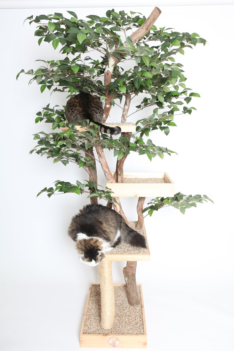 Sycamore Cat Pet Tree House image 5