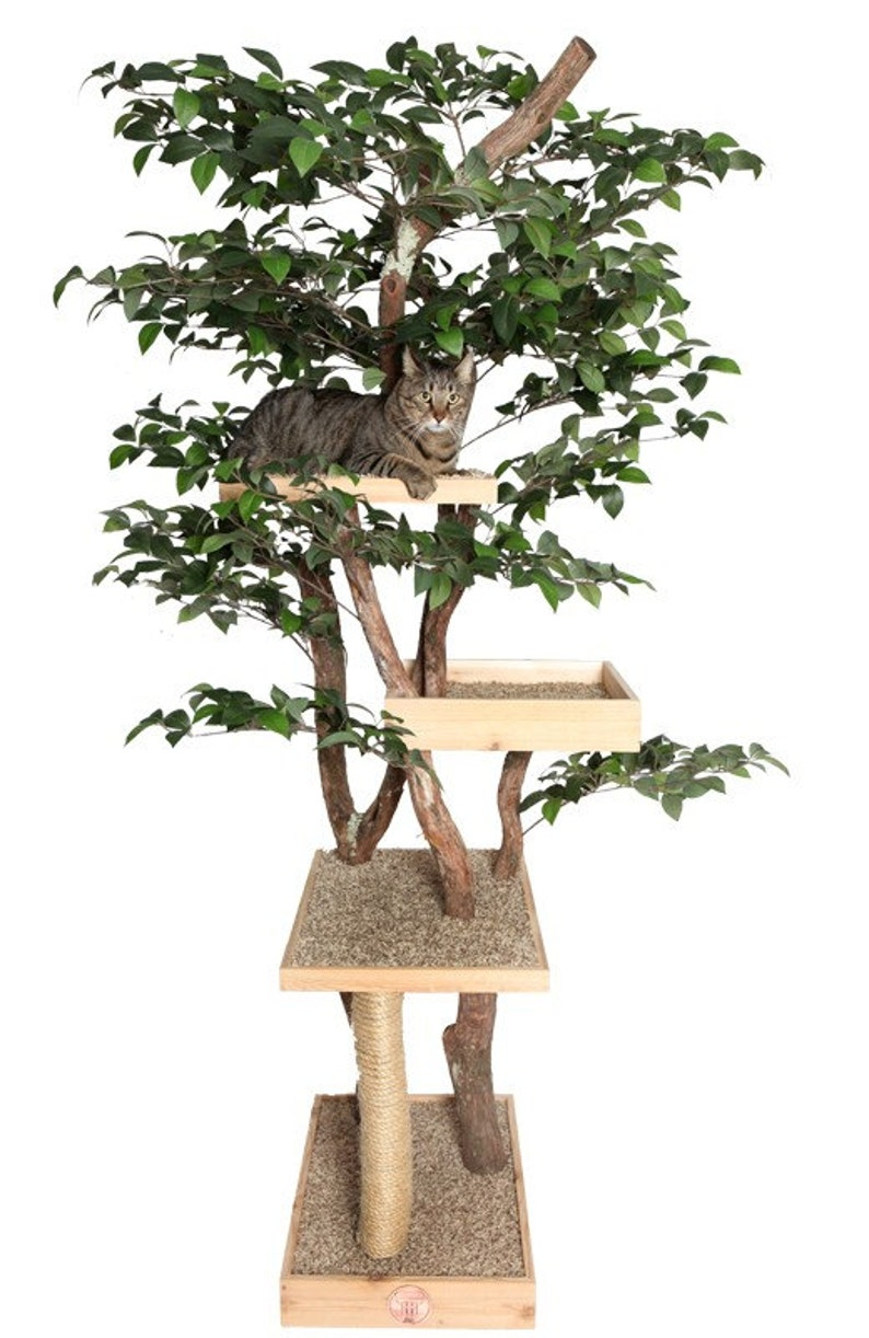 Sycamore Cat Pet Tree House image 0