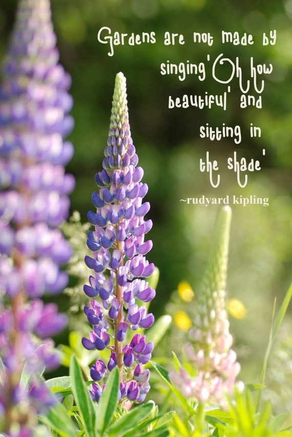 lupins digital photography inspirational quote
