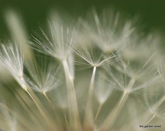 Dandelion Photo, Macro Flower Photography, Inspriational, Green, White, Dreamy Photography, Digital Download, Printable Photograph - Wish