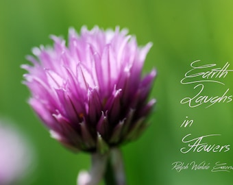 Digital Download Photograph, Typography Art, Printable, Literary Quote, Garden Quote, Chives, Flower Photography, Earth Laughs in Flowers