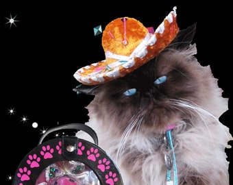 Cat-Dog Sombrero-Birthday Hat -Customizeable Sauza Gold Sombrero for cat or dog