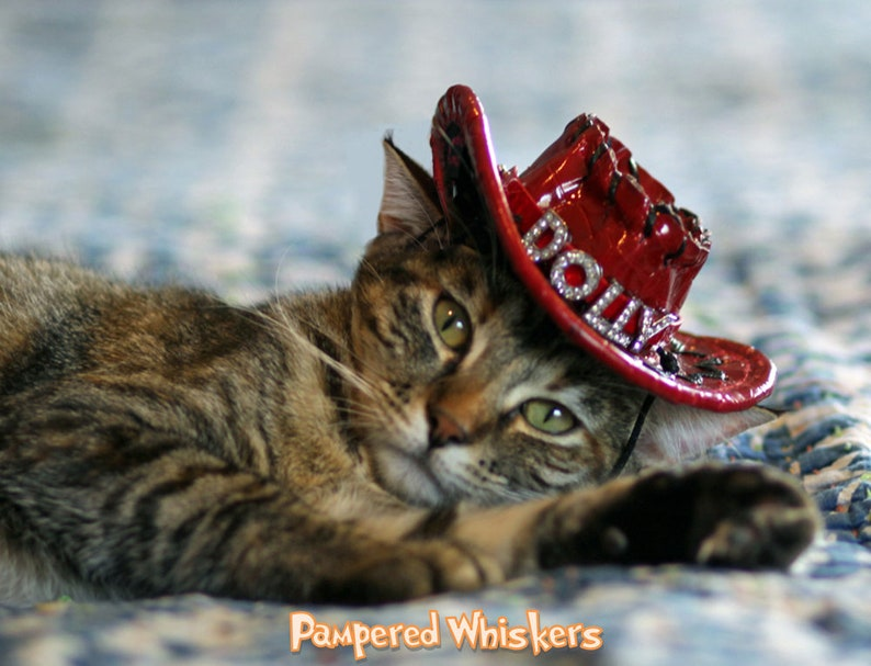 Cat Birthday Hat For Personalized Cowboy Cats Image