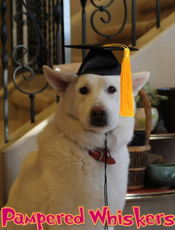 Graduation Cap For Dogs And Cats Your Choice Of Tassel
