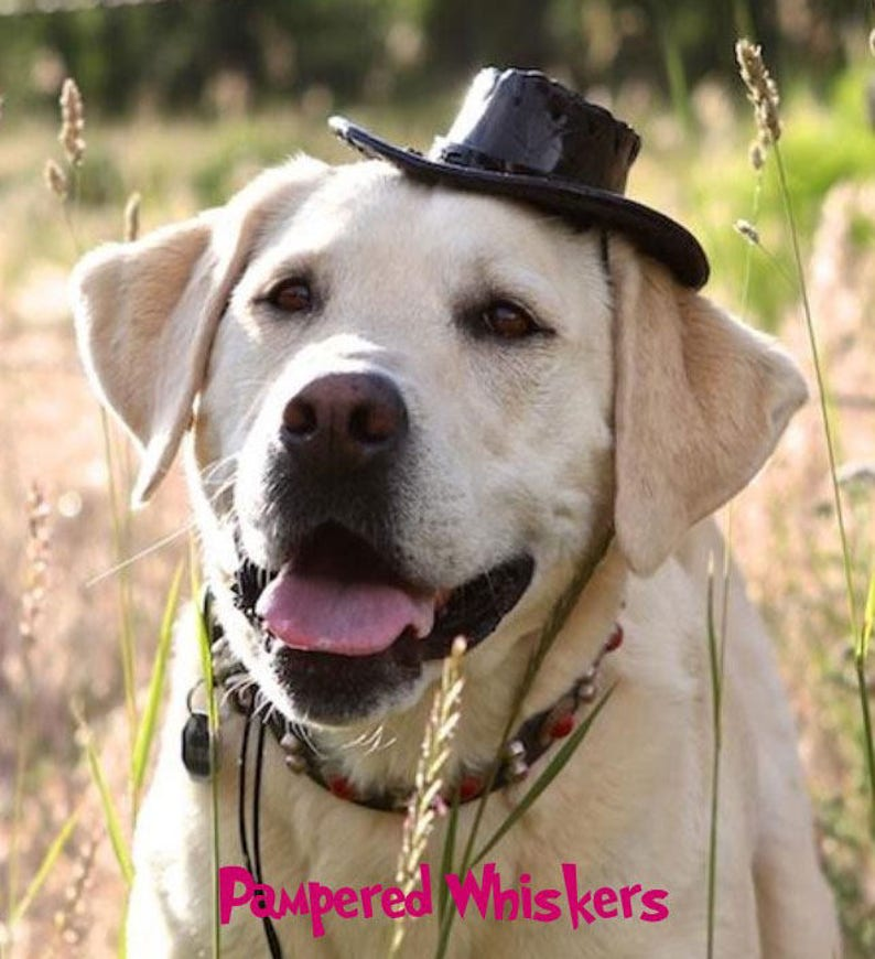 personalized red/_black/_ tan Cowboy Hat for Dogs and Cats Dog/_Cat Cowboy hat for cats and dogs