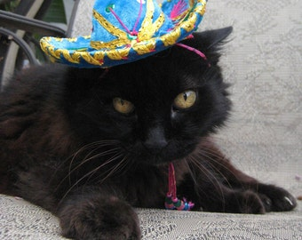 Cat-Dog Birthday Hat - Customizeable Turquoise Sombrero for cat or dog