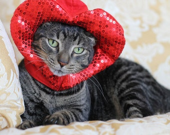 Valentines Day cat dog hat