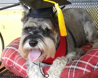 Graduation Cap for dogs and cats