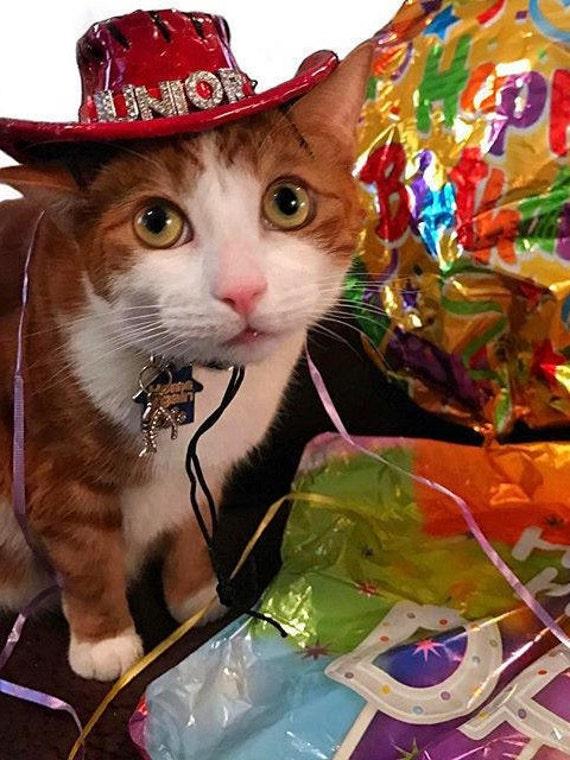 Cat Birthday Hat Party Dog