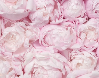 Peony Photography - A Bed of Peonies, French Peony Fine Art Photograph, Gallery Wall, Blush Pink Floral Decor, Large Wall Art, Home Decor