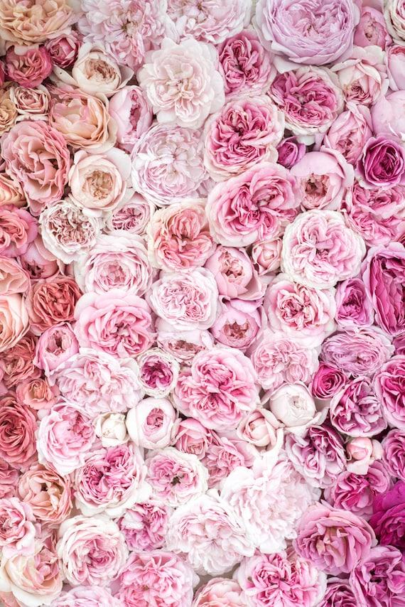 Rose Photography Bed Of Roses I Botanical Photograph Etsy