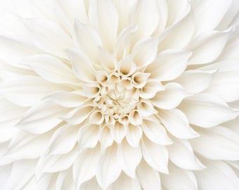 Flower Photography - White Dahlia Detail, Floral Still Life Photography, Botanical Wall Decor, Neutral Decor, Large Wall Art