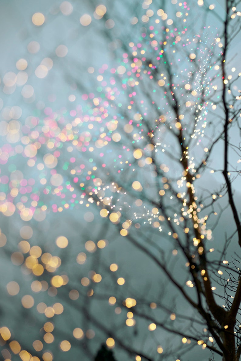 Winter Photography  Holiday Fairy Lights in Trees Festive image 0