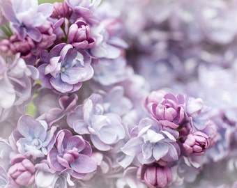 Floral Photography - Double Lilac Blossom, Fine Art Photography, Purple and Mauve Romantic Wall Decor