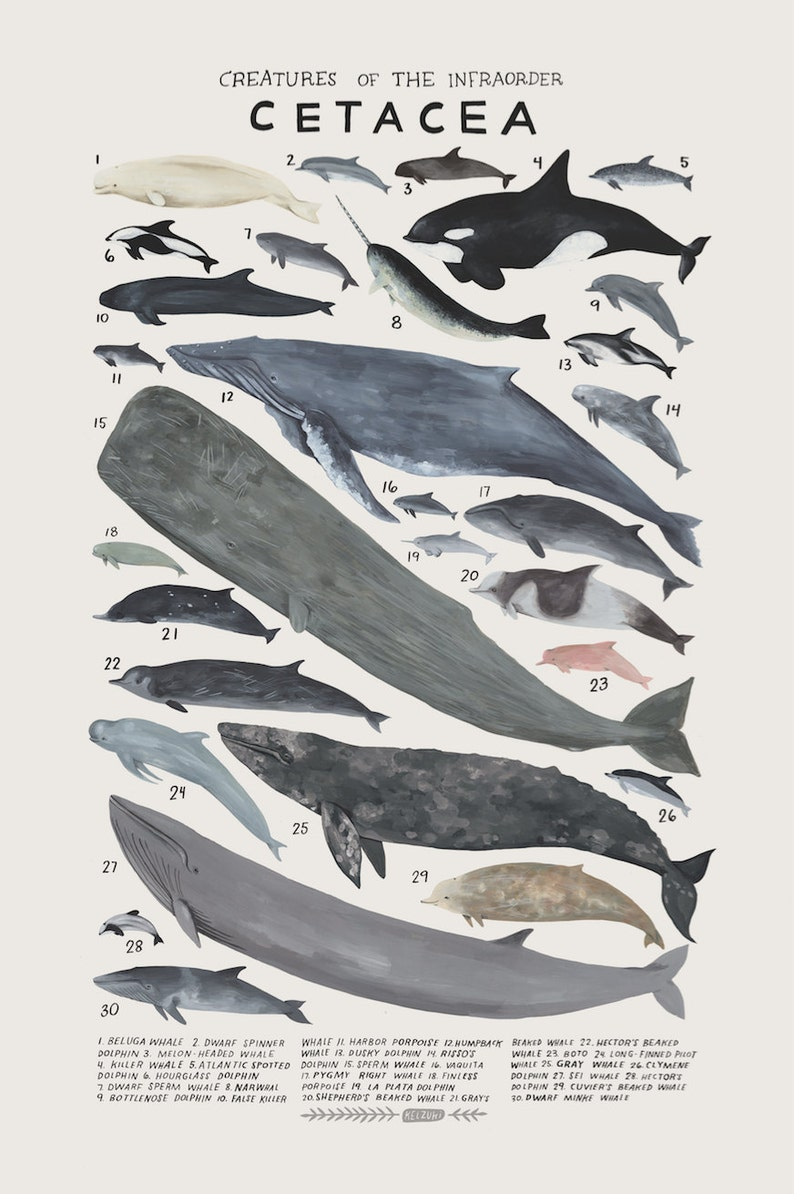 Creatures of the infraorder Cetacea vintage inspired science image 0