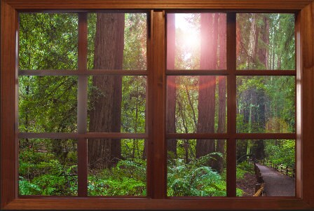 wall mural window self adhesive forest window view-3 sizes | etsy