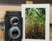 Wall Art - Corn - Fine Art Print