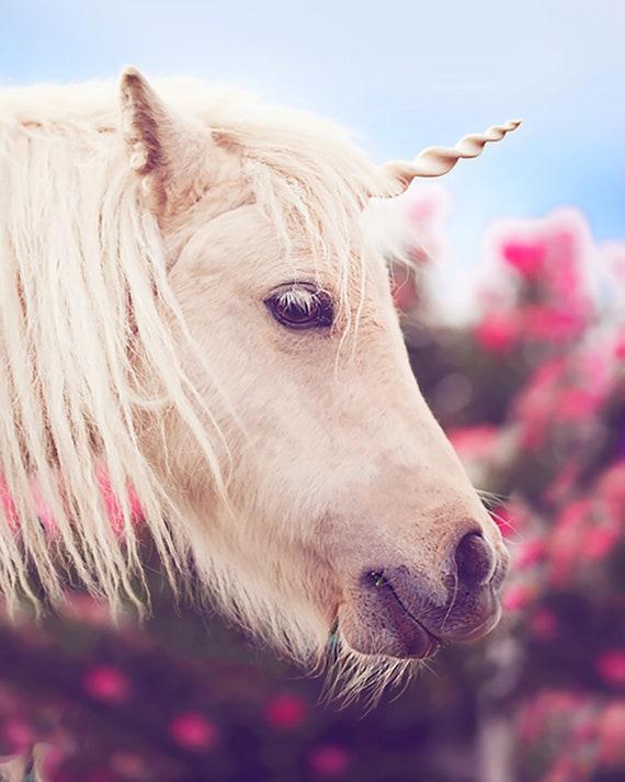 Horses Ponies and Unicorns