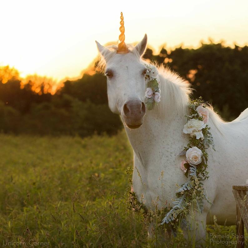 5930b1a8e25 Unicorn horse costume   unicorn horn for horse   unicorn horn