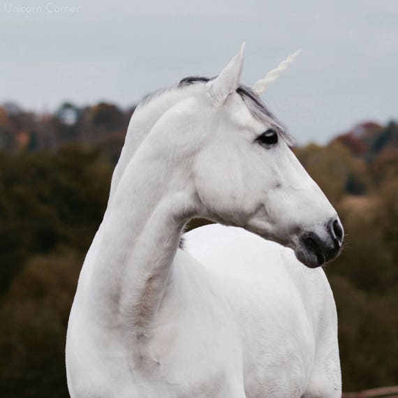 Unicorn Horn for Horses or Ponies / Realistic plastic ...