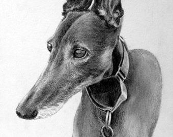 "Custom graphite pencil pet portrait 8"" x 10"""