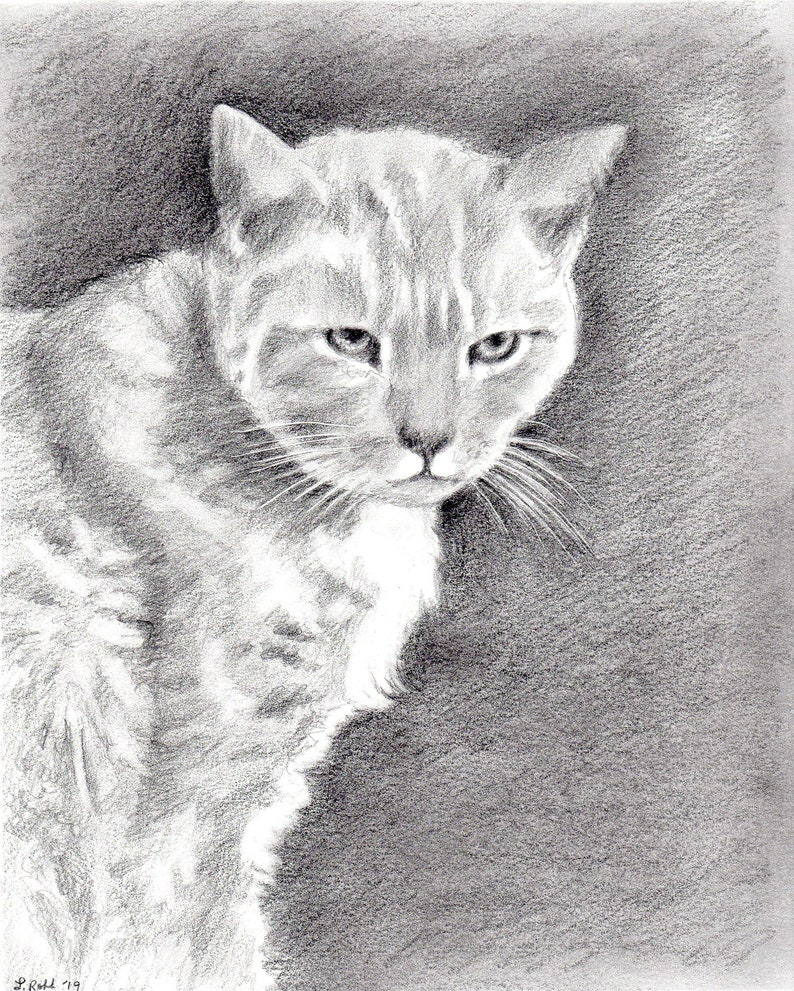 Custom kitty 8 x 10 graphite pencil pet portraits