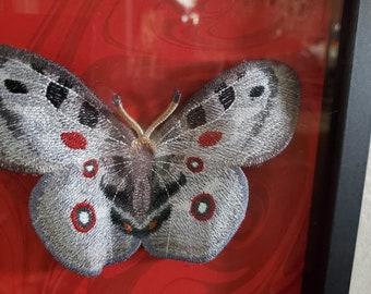 Framed 9x9 3D embroidered framed Apollo Moth Butterfly specimen